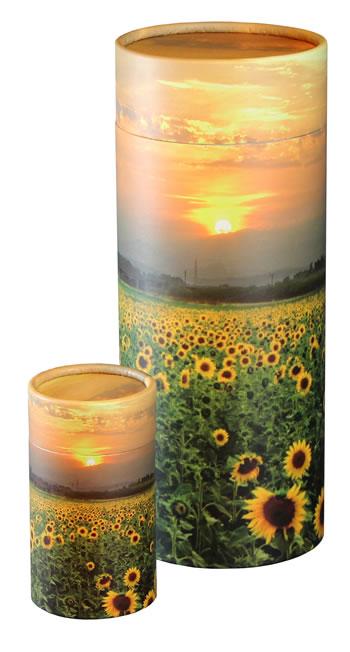 Scattering Tube Sunflower Fields